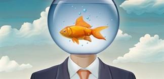 Não cá vàng là gì? Cách nhận biết người bị bệnh não cá vàng