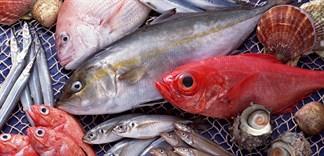 Những loại cá chứa hàm lượng thuỷ ngân cao cần hạn chế sử dụng
