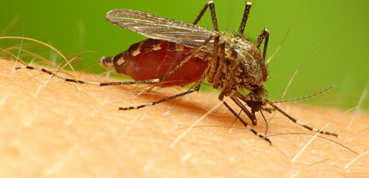 Bệnh sốt rét và những điều cần biết