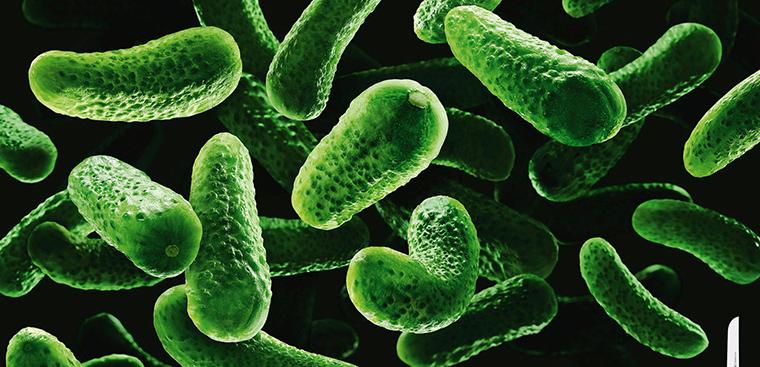 Bệnh dịch hạch và những điều cần biết