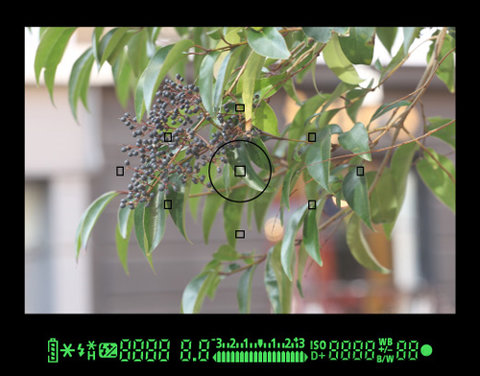 Hệ thống lấy nét 9 điểm và thông số hiển thị trong viewfinder